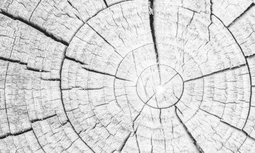 Baum_Beratung_weiß